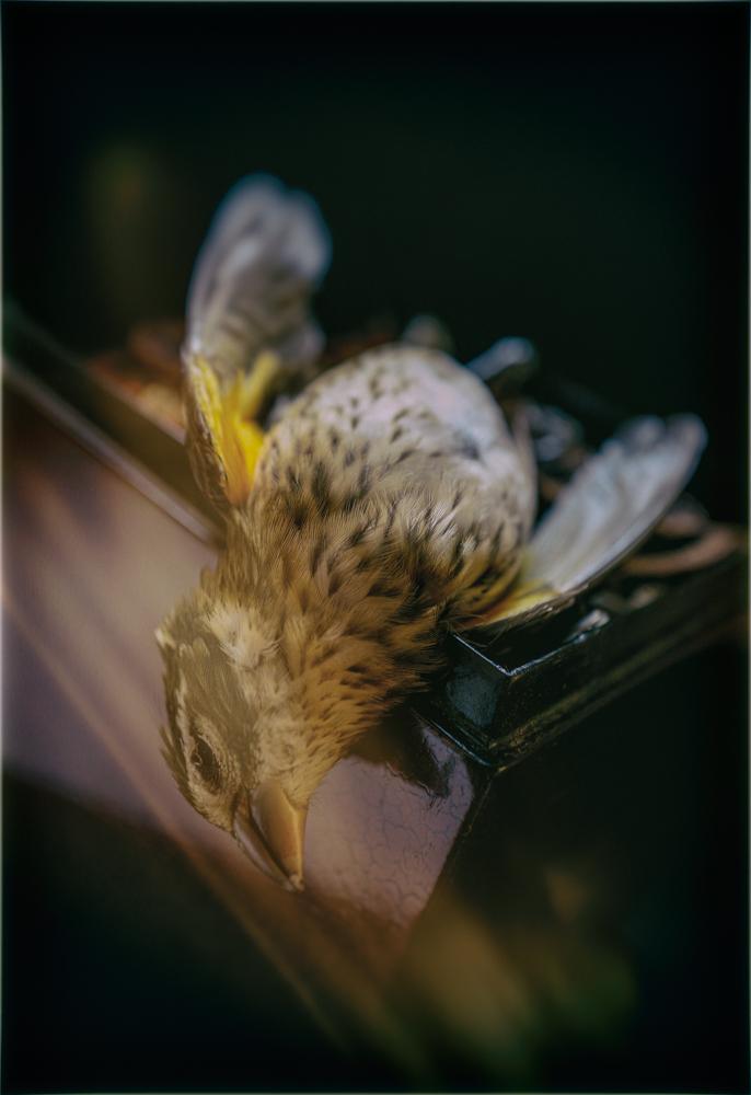 Kiefer_Bird-1-5b489991
